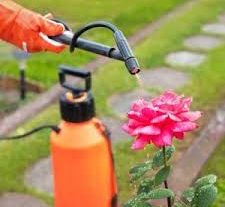 Global Household Insecticides Market
