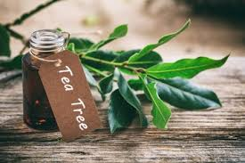 Global Tea Tree Essential Oil Market